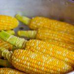 Thajská GMO kukuřice nabyla vědomí a vzbouřila se proti lidem