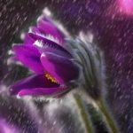 Šokující odhalení: Lidstvo je indoktrinováno pokojovými rostlinami