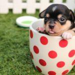 Číňané otevřou v Praze první psí restauraci v Česku