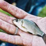 EU chce zakázat rybí prsty, protože ryby nemají prsty