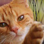 Ruští vědci zbořili mýtus, že kočky mají 9 životů. Všech 100 testovaných koček zabili na první pokus