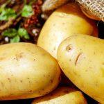 Rusové vypěstovali mluvící bramboru. Má IQ 168 a jmenuje se Igor