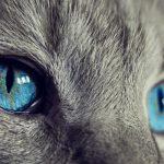 Čaj z kočičích chlupů čistí střeva a funguje jako prevence proti rakovině