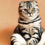 Čínští vědci potvrdili, že když vyperete kočku v aviváži, tak zhebne